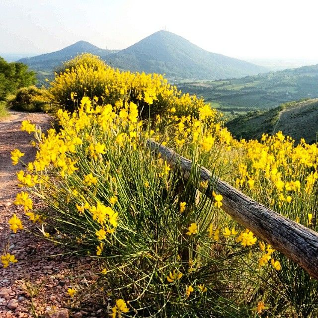 Nature Flowers and Italian Hills surrounding Abano and Montegrotto Hot Springs | @happy_ste Colli Euganei Abano Terme e Montegrotto Terme