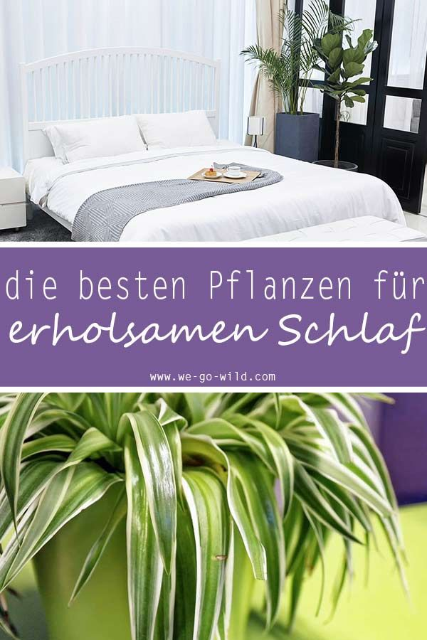 Pflanzen im Schlafzimmer – 9 Luftreiniger helfen beim Schlafen