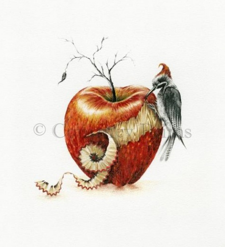 """""""it's a bit woody"""" pencil on paper drawing by Courtney Brims. Apple, tree, bird."""