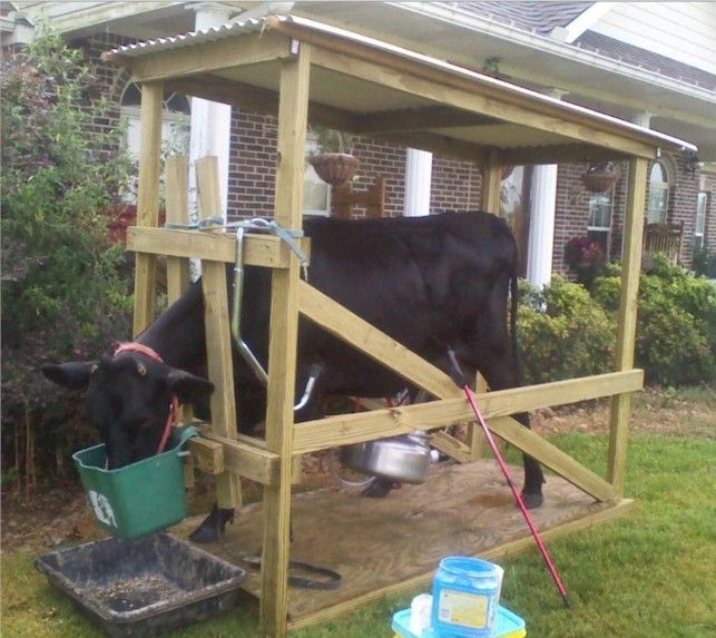 1000 Ideas About Feeder Cattle On Pinterest Cattle
