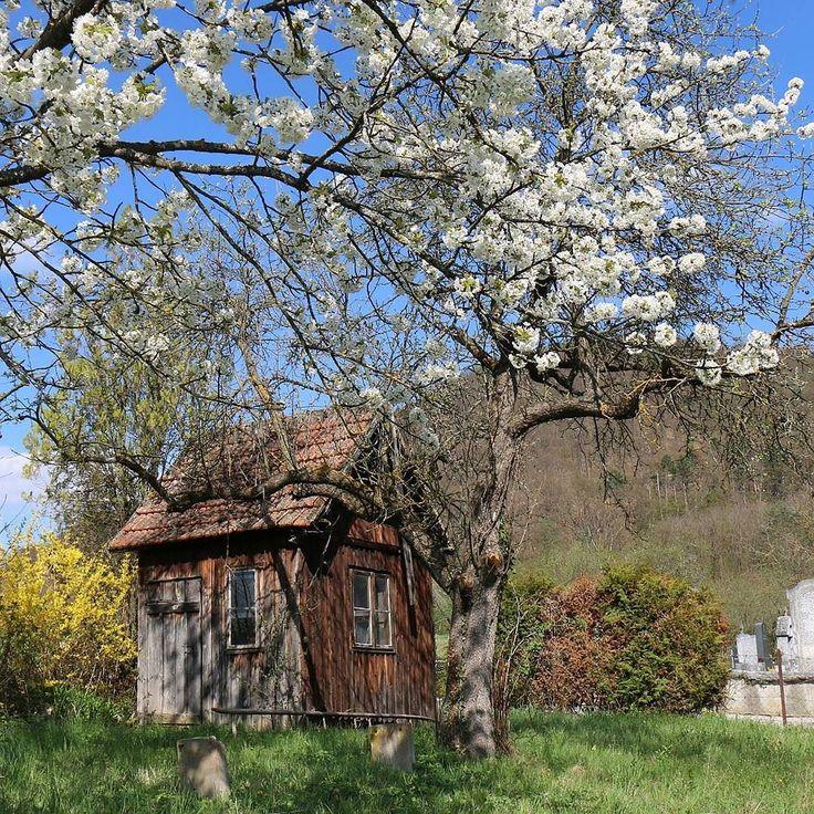 gdzieś w Dolnej Austrii  #österreich #austria #Dunaj #igersaustria #igersvienna #visitaustria #nofilter #travel #travelpic #travelporn #niederösterreich #nö #iloveit