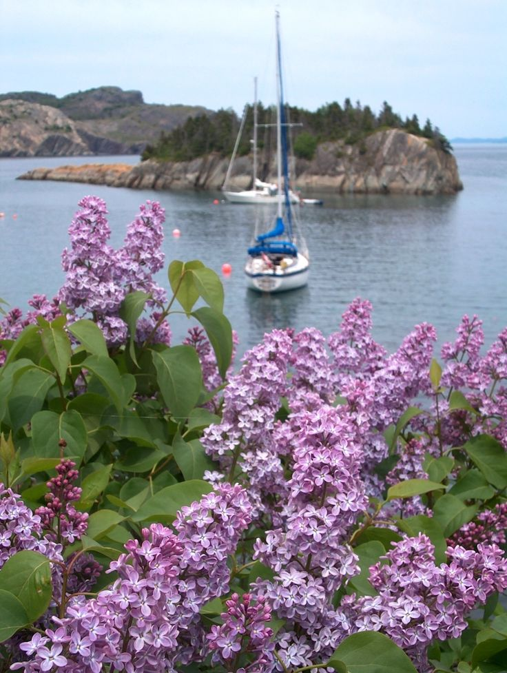 Beautiful Brigus, Newfoundland, Canada <3