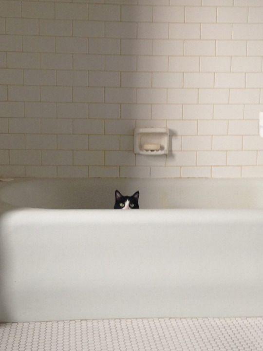 En menudoanimal.com encontrarás todo lo que necesitas para acicalar a tu gato con donativo incluido para una protectora.