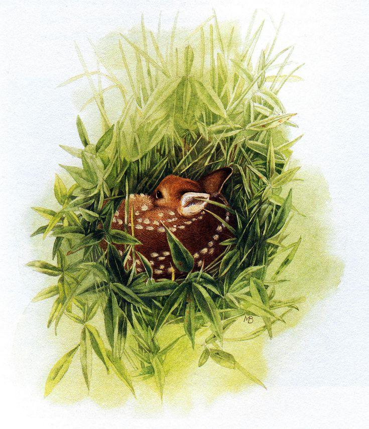 Les 87 meilleures images du tableau marjolein bastin - Bastin de bois ...