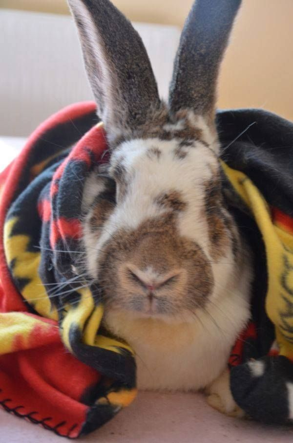 It's Amber. She is cute and #adoptable #rabbit #rabbits