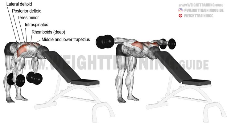 Head-supported bent-over dumbbell lateral raise exercise ...