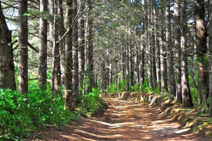 Parque Nacional Montecristo - Life & Travel