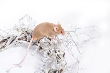 Λήψη - Περίεργος μπεζ ποντίκι που κάθεται σε ένα στεφάνι από κλαδιά, τυλιγμένο σε γιρλάντες από Λευκά κρύσταλλα — Εικόνες αρχείου #92069804
