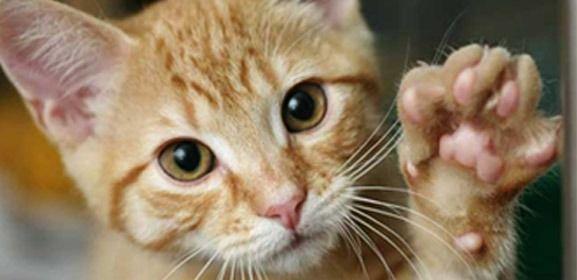 Cómo evitar que tu #gato arañe los muebles #arañazos #educación