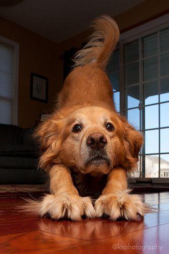 Quick Yoga Lesson: Downward-facing dog! -- KS Photography