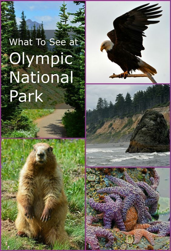So much to see and explore in Washington State's Olympic National Park!