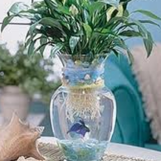 Betta fish in vase joy studio design gallery best design for Plants for betta fish vase