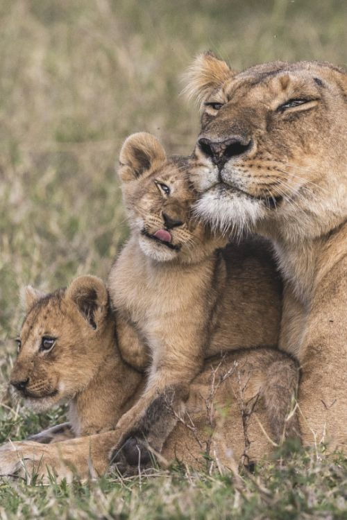 207 Best Images About Lion Camp On Pinterest San Diego