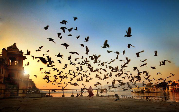 Bird Walker by Vimal Chandran on 500px