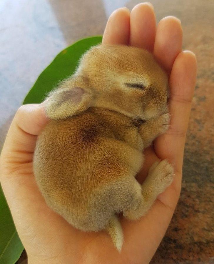 Über 30 liebenswerte Hasen, die Sie in den Geist von Ostern versetzen   – Tiere Bilder