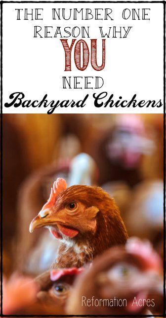 You need a few chickens in your backyard... here's the number one reason why.    www.reformationacres.com
