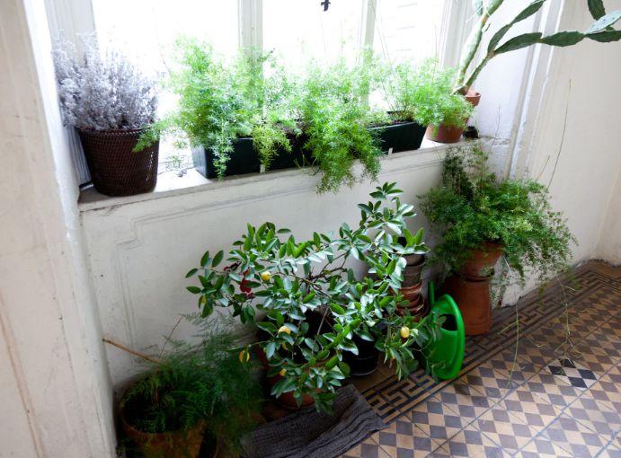 Desain Mini Garden Indoor : mini indoor garden  garden  Pinterest