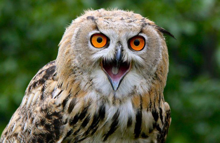 valkuil (roofvogelshow) Herkenbosch