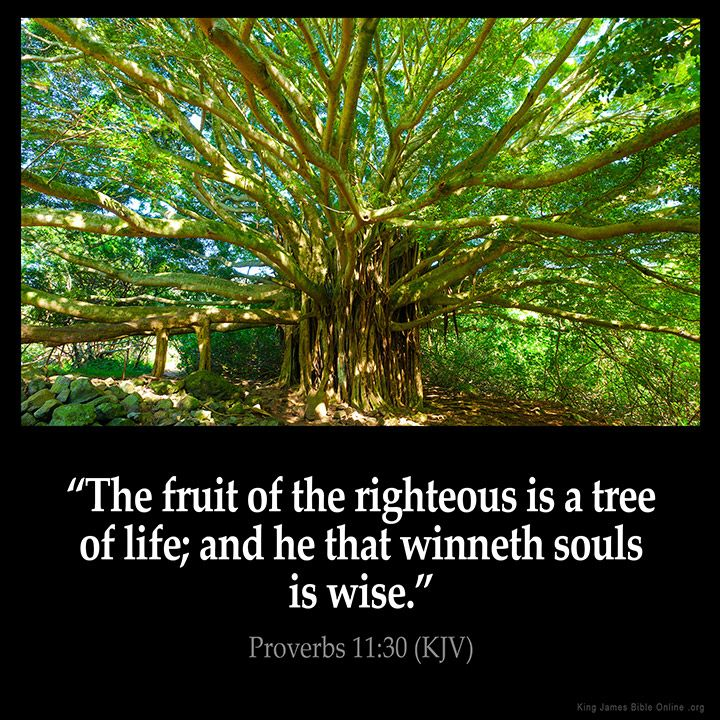 Proverbs 11:30  The fruit of the righteous is a tree of life; and he that…
