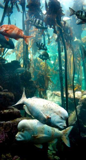 Life teems in an underwater kelp forest.