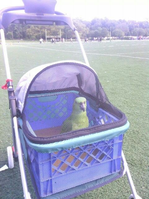 Small pet stroller made for a parrot