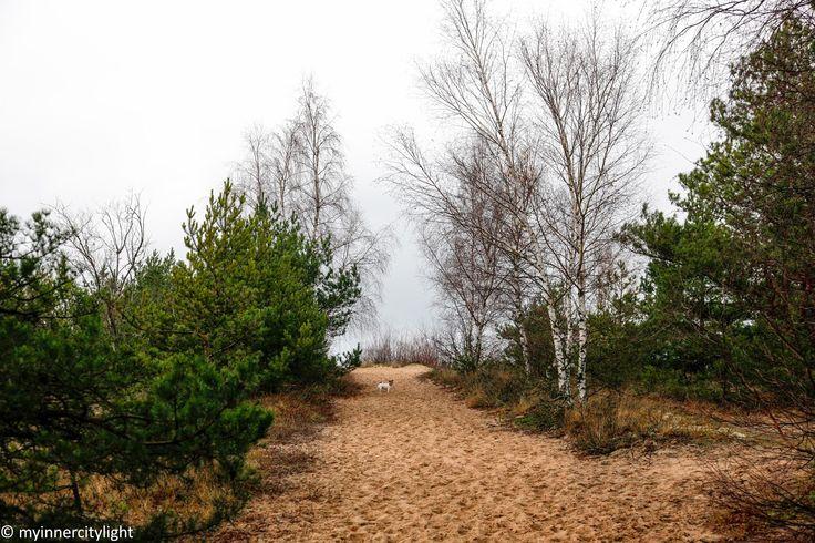 my inner city light #myinnercitylight #beach #autumn #balticsea #jackrusselterrier