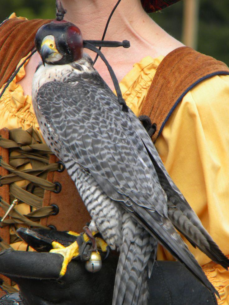 Renaissance Faire falconry.