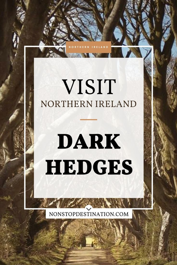 Passing through the Dark Hedges in Northern Ireland - Non Stop Destination