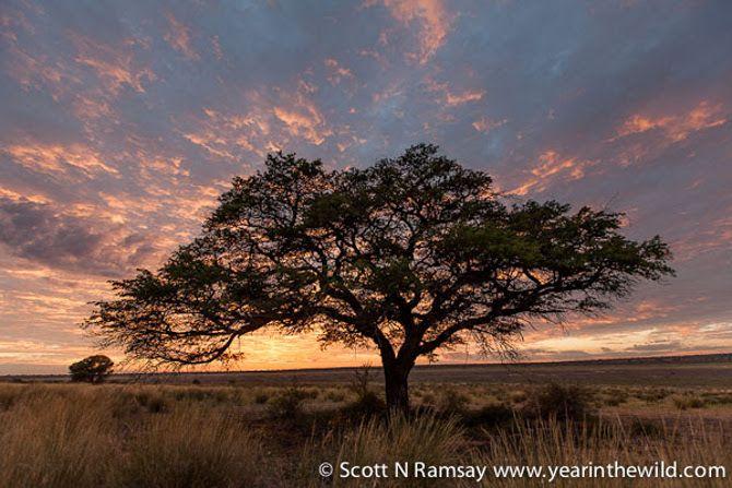 Sunrise, Kgalagadi style, at Mpayathutlwa pan in Mabuasehube.