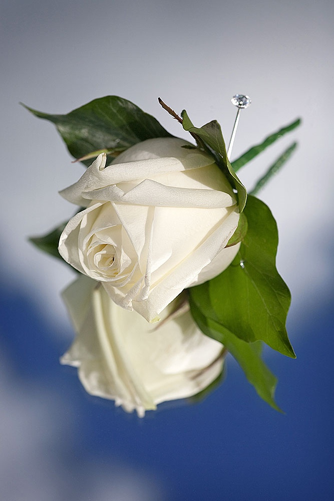 Ivory Rose Buttonhole