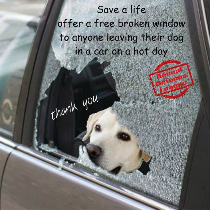 DON'T LEAVE YOUR CHILD OR YOUR DOG IN A CAR!