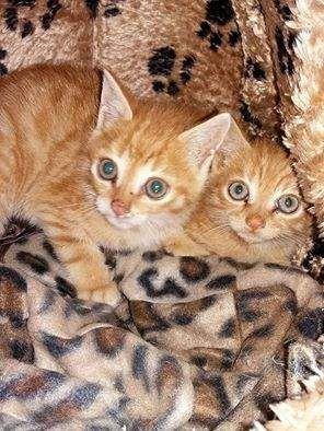 Gattini splendidi cercano una casa