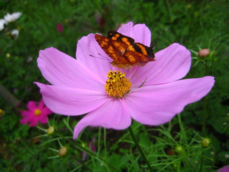 Flower & Butterfly by Churaipon C. Klaijumlang