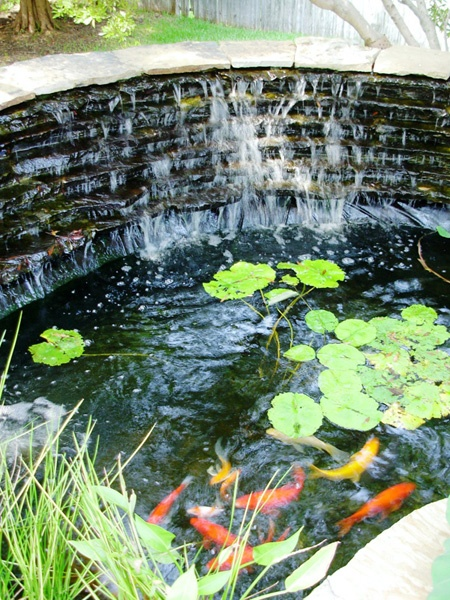 1000 images about koi pond ideas on pinterest gardens for Nice koi fish pond