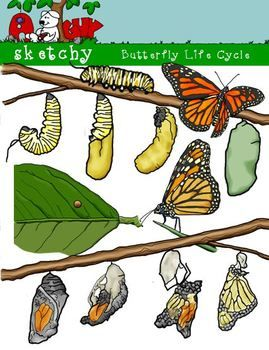 45 best Science themed clipart, Papers, activities, and ...