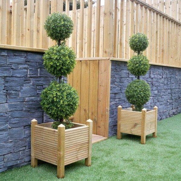 Triple ball Boxwood Buxus topiary trees
