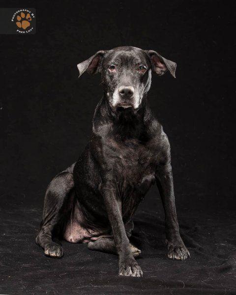 Labrador-Mischling Annabelle wurde ausgesetzt und musste mehr als ein Jahr...