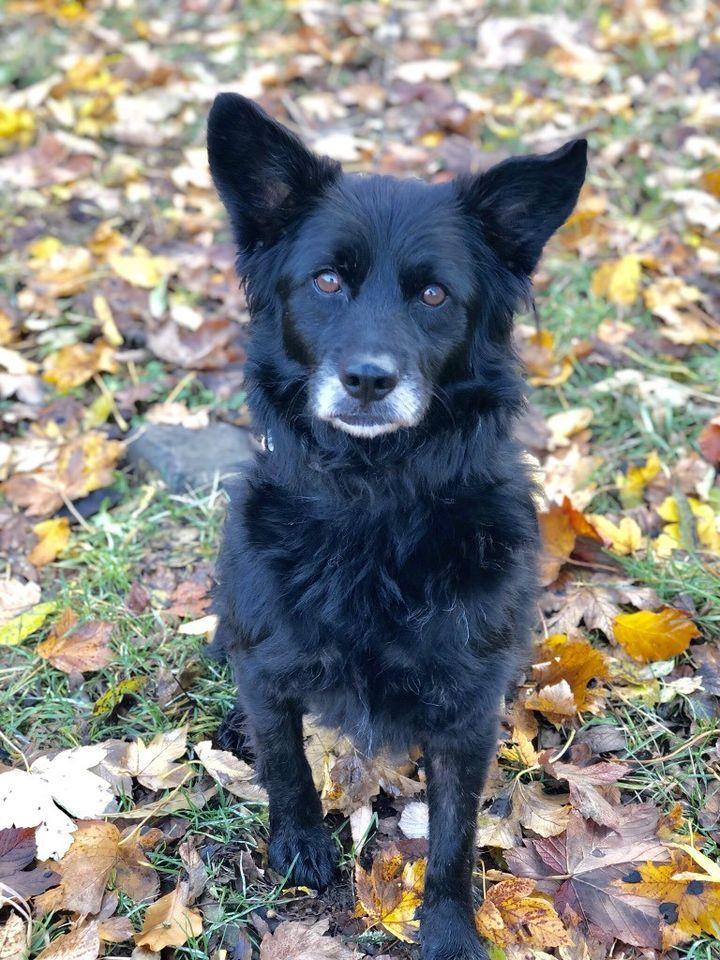 Kinderlieber Kleiner Familienhund Sucht Seinen Herzensplatz In