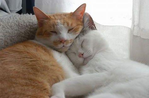 Tiernas Fotos De Gatos Enamorados Imagen De Gatos Gatitos