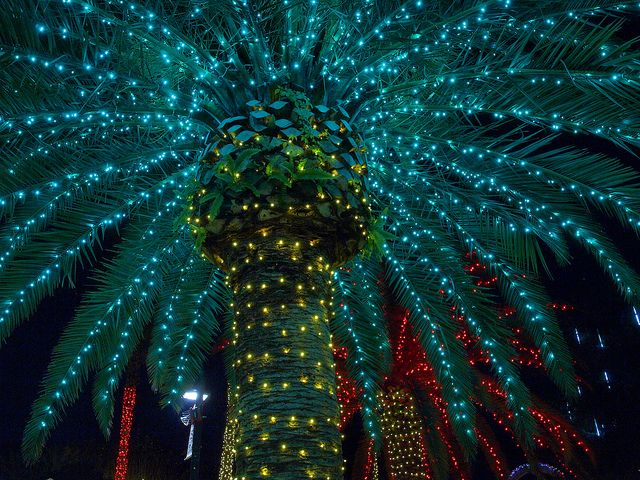 193 best images about christmas by the beach on pinterest - Florida botanical gardens christmas lights ...