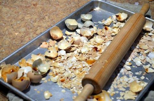 Ne jetez pas vos coquilles d'œufs ! Mettez-les dans un plat et, avec un rouleau à pâtisserie, réduisez-les en miettes. Placez les coquilles d'œufs écrasées à la base de vos plantes. Elles les protégeront des insectes et leur apporteront du calcium.