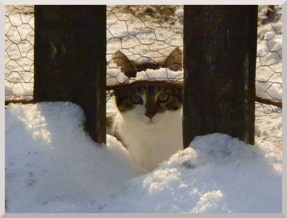 #cat #cats #cutecat #winter #snow