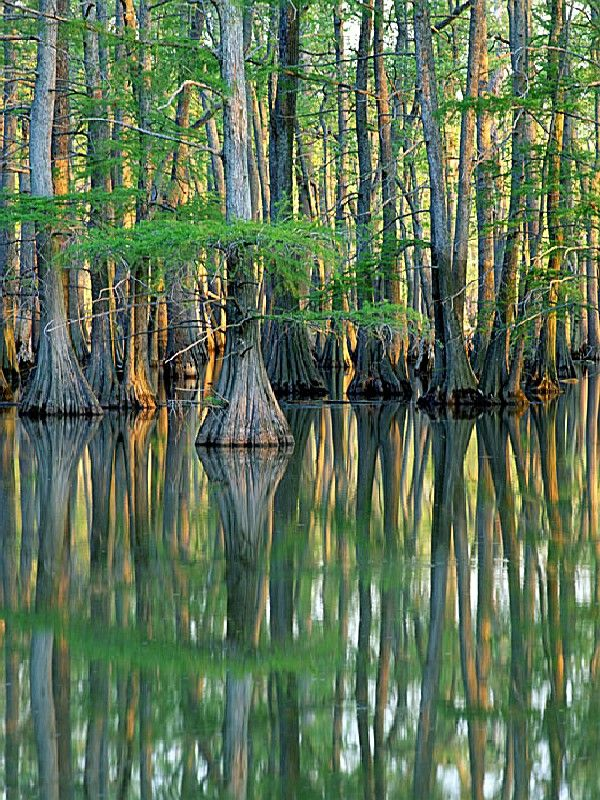 Horseshoe Lake State Park, an Illinois State Park located nearby Belleville, Bethalto and Bridgeton