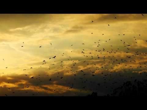 Symbolic meaning of feathers | Gustavo Santaolalla - Pajaros