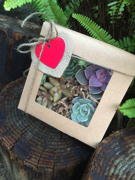 Succulent Treasures Gift Box. Four Assorted Premium succulents Gift.