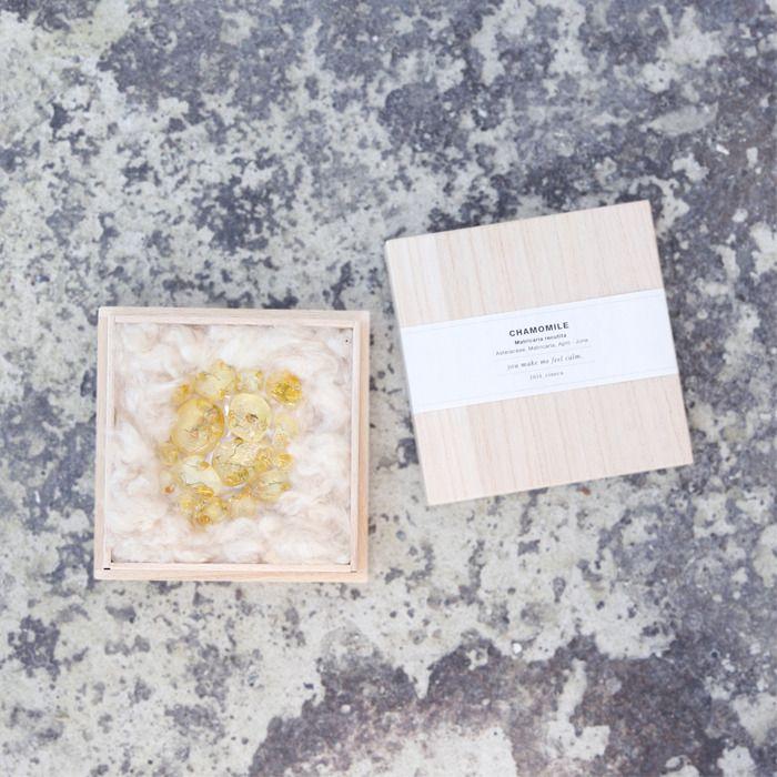 herbaium | cineca