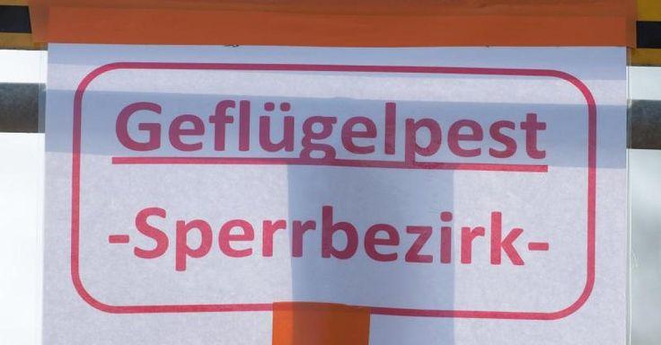 #Gesundheit: Vogelgrippe bei totem Schwan im Landkreis Lörrach gefunden - FOCUS Online: FOCUS Online Gesundheit: Vogelgrippe bei totem…