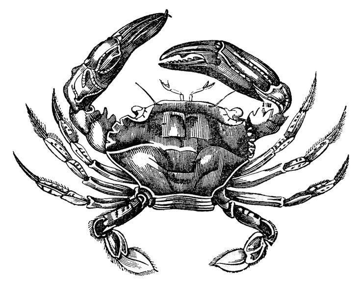 Vintage Clip Art - 3 Fine Crabs & Seahorse Printable - The Graphics Fairy