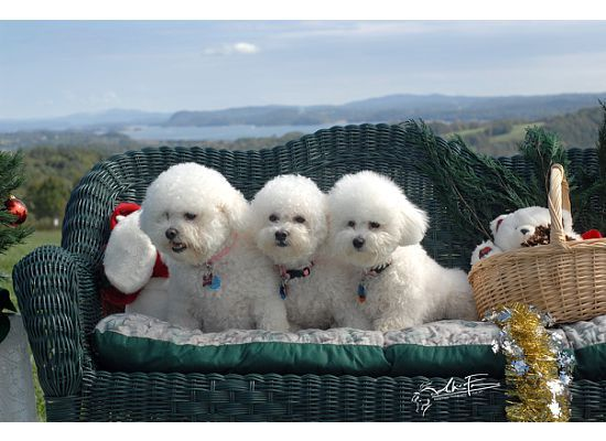 Best Canned Dog Food For Maltipoo