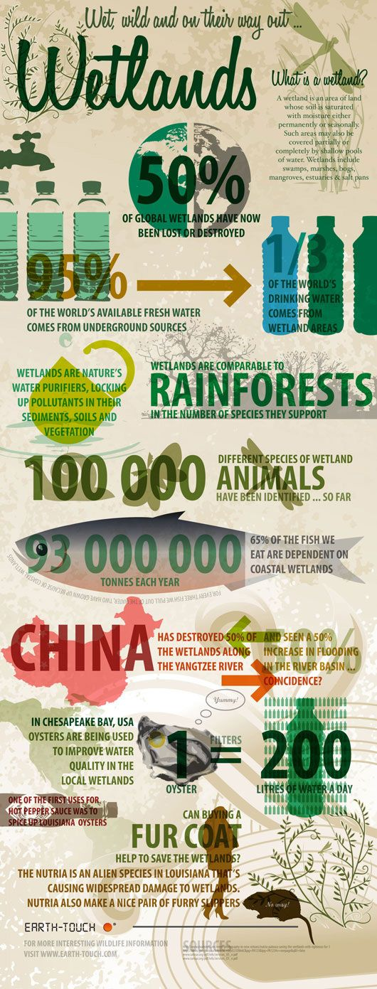 The current state of wetlands worldwide #infographic: Destruction Infographic, Green Infographics, Environment Infographics, Environmental Infographics, Architectural Infographics, Environmental Science, Science Infographic, Green Living, Eco Infographics